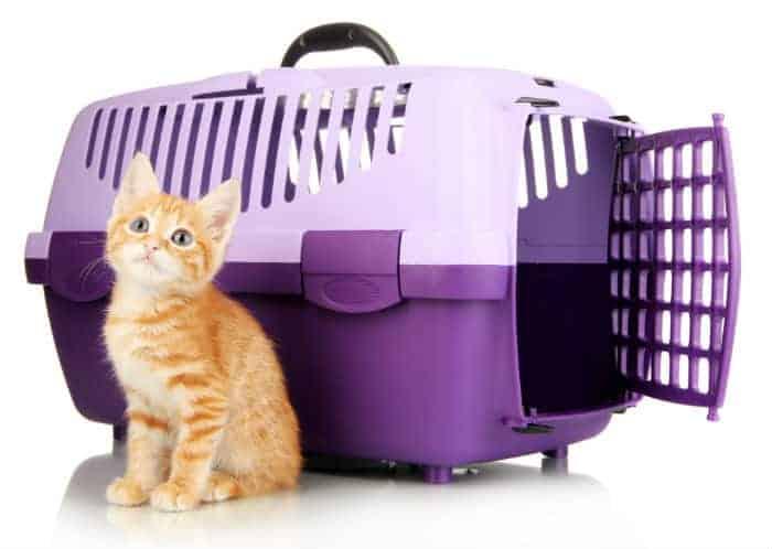 Plastikowy kontenerek dla kota