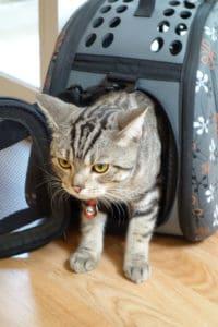 Kot w transporterku