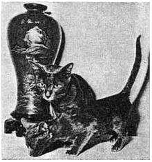 Koty Korat